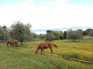 Last stop, horse farm in Verrazzano.